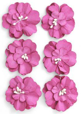 Kwiaty Cynia różowy