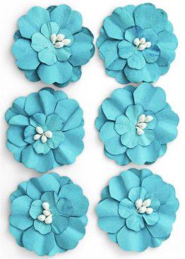 Kwiaty Cynia niebieski