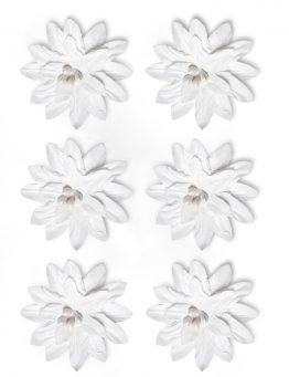 Kwiaty Dalia biały